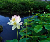 Jardin_botanique_de_Montreal_16 (170x143, 43Kb)
