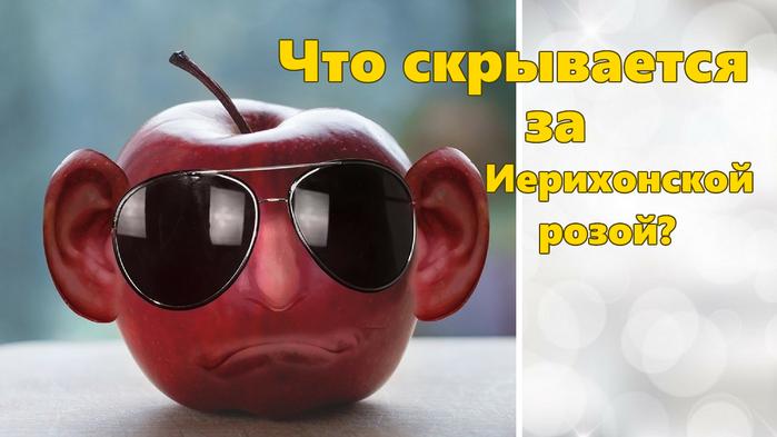4315266_chto_skrivaetsya_za_ierihonskoi_rozoi (700x393, 299Kb)
