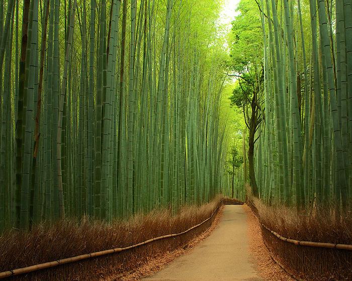 Бамбуковый лес, Япония (700x560, 639Kb)