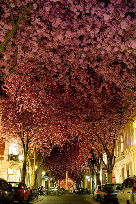 Улица г. Бонн, Германия (466x700, 685Kb)