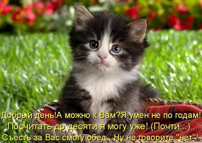 1261565727_1261242327-prikolnye-koshaki-21 (700x495, 90Kb)