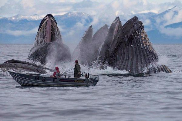 2. Рыбакам очень повезло, что киты не перевернули их суденышко (600x400, 185Kb)