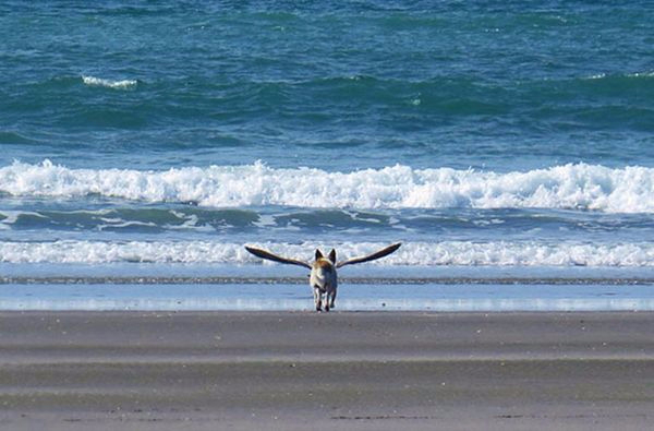 9. Собака с крыльями В Греции возможно всё (600x395, 193Kb)