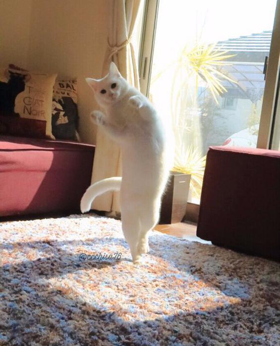 прикольные фото кошек 2 (565x700, 417Kb)