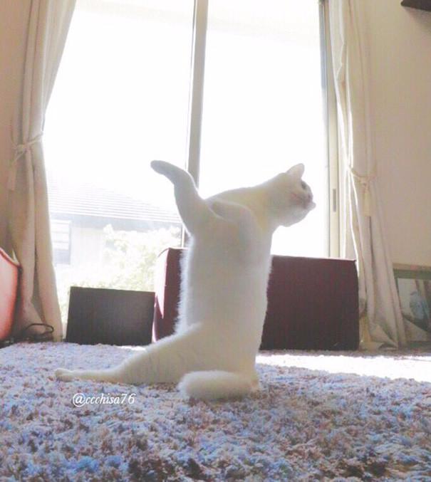 прикольные фото кошек 4 (605x677, 309Kb)