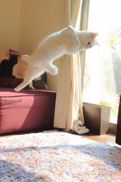 прикольные фото кошек 7 (465x700, 310Kb)