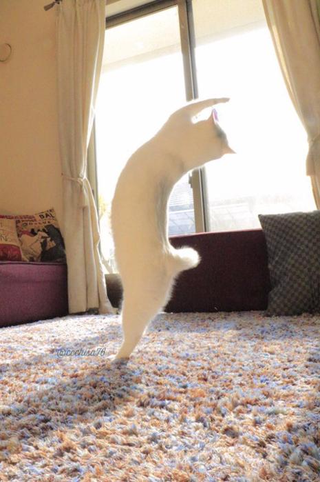прикольные фото кошек 9 (465x700, 363Kb)
