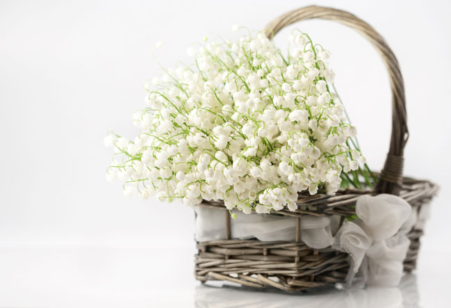 5420033_flowers_in_basket (649x443, 46Kb)