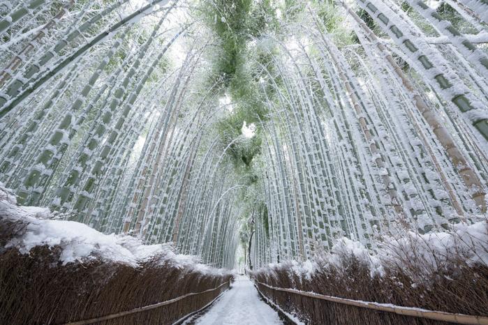 бамбуковый лес в киото 6 (700x466, 444Kb)
