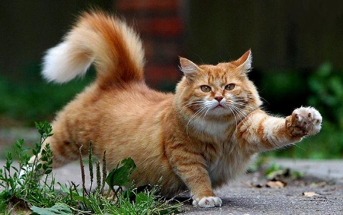 cat-pic-1280x800-79b7267 (700x437, 562Kb)