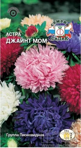 astra_dzhaynt_mom (266x484, 184Kb)