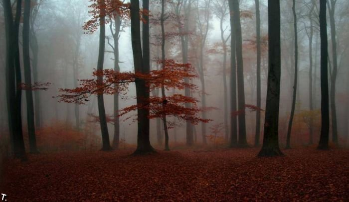5672049_beautiful_forests_11 (700x407, 47Kb)