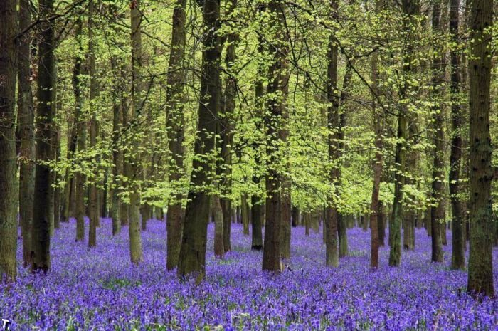 5672049_beautiful_forests_15 (700x465, 127Kb)
