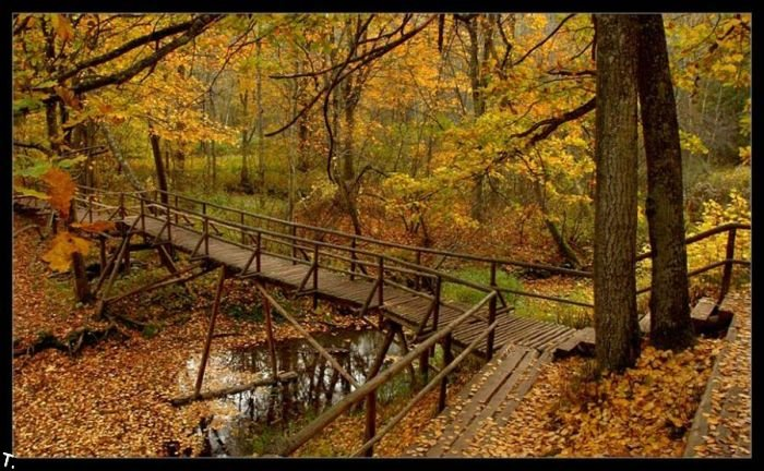 5672049_beautiful_forests_19_1_ (700x432, 99Kb)