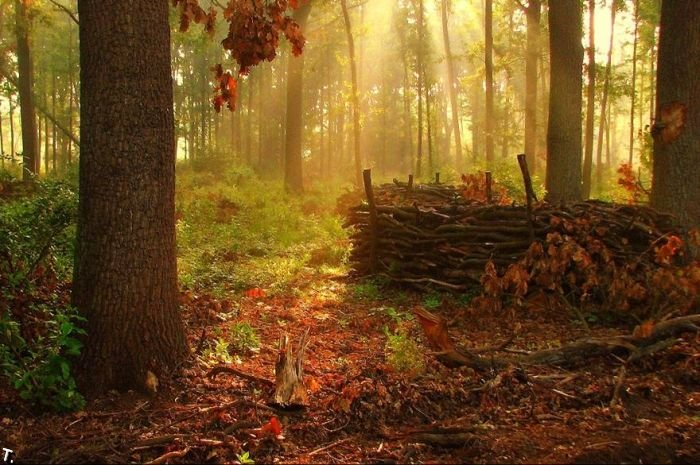 5672049_beautiful_forests_06 (700x465, 91Kb)