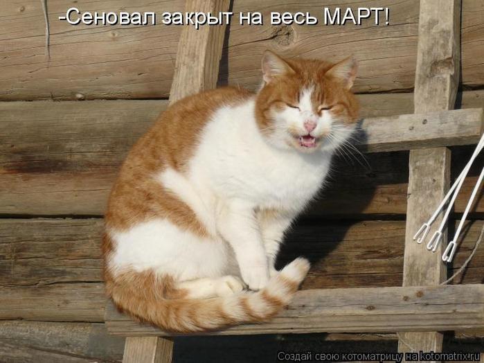dlyakota.ru_kotiotkotomatrici_1328341670491 (700x524, 338Kb)