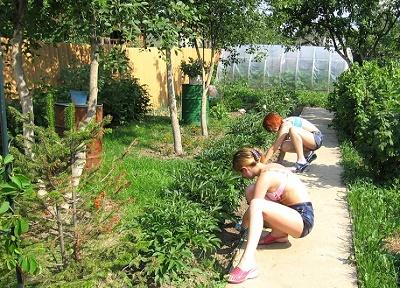 выращивание культурных растений (400x288, 94Kb)