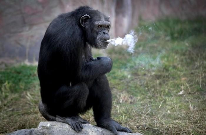 Алкоголизм инаркомания у животных