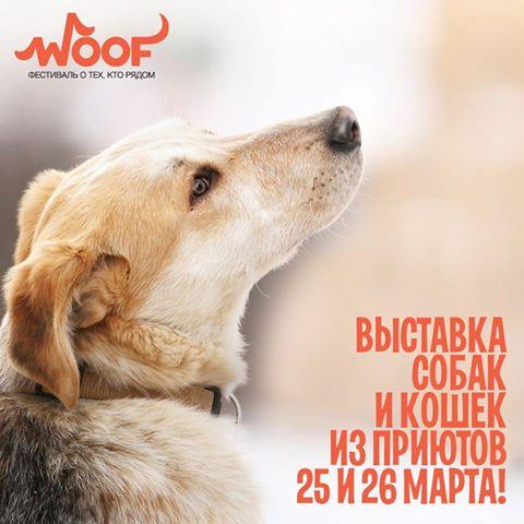 3483673_Vistavka_Nika (480x480, 35Kb)