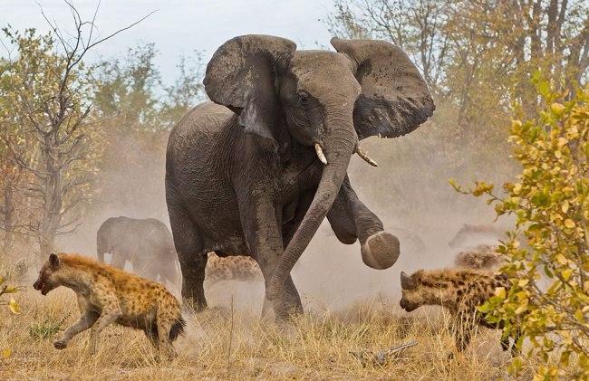 Зверские шедевры National Geographic5 (650x421, 301Kb)