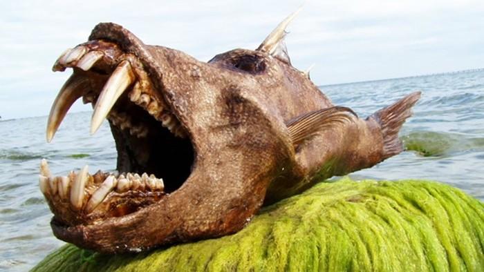 10 самых страшных чудовищ из океанских глубин
