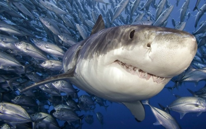 В морях и океанах заканчивается рыба