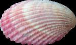 Превью Colorful Beach (59) (600x363, 340Kb)