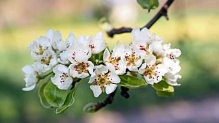 3492655_appleblossoms1368195__180 (320x180, 16Kb)