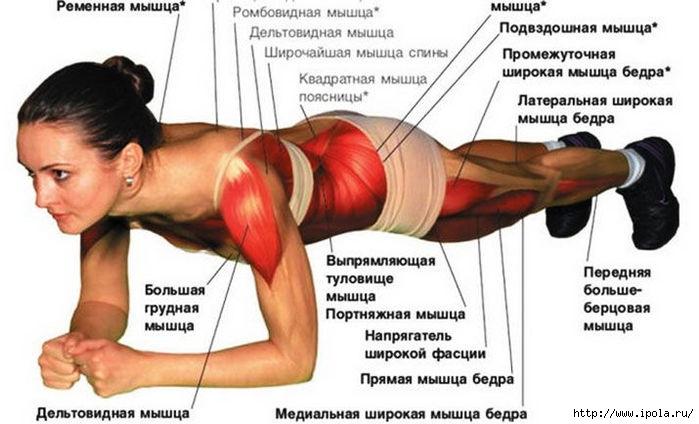 """alt=""""Упражнение «планка»: как правильно делать и для чего его делать""""/2835299_Yprajnenie_PLANKA (700x424, 150Kb)"""