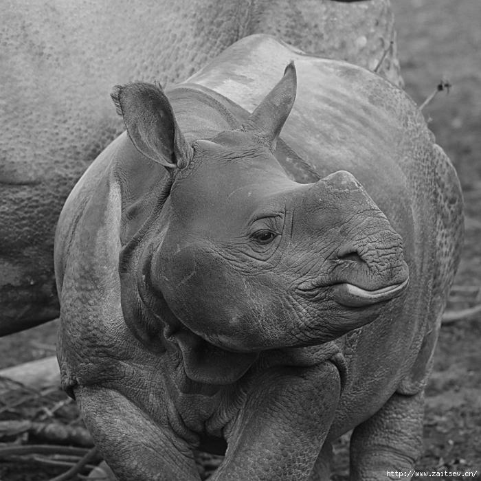 Носорог /2178968_rhino2079308_1280 (700x700, 327Kb)