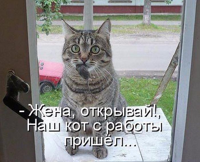 кот2 (700x569, 292Kb)