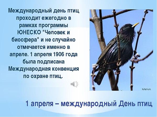 1. междунар.жень птиц - 1 апреля 1 (600x450, 240Kb)