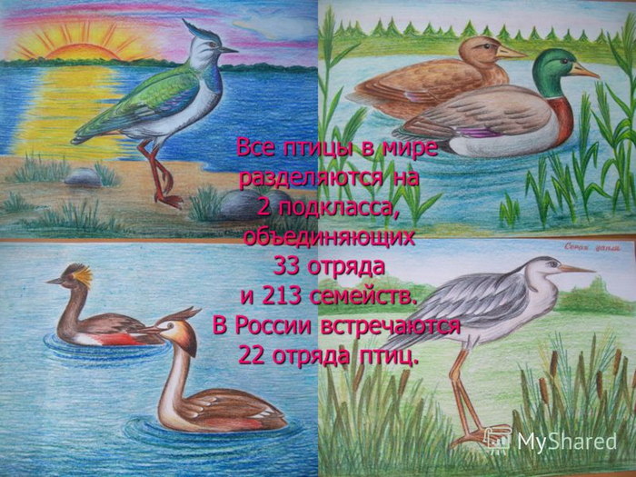 птицы 22 отряда в россии (700x525, 473Kb)