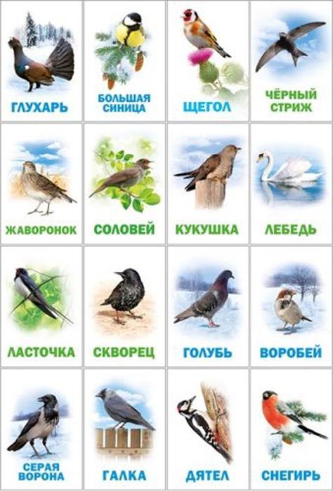1. птицы зимующие и перелетн. (474x700, 288Kb)
