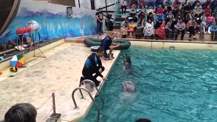 Жесткая драка в дельфинарии