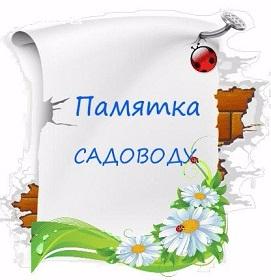 128714883_3621707_1_1_ (271x280, 74Kb)