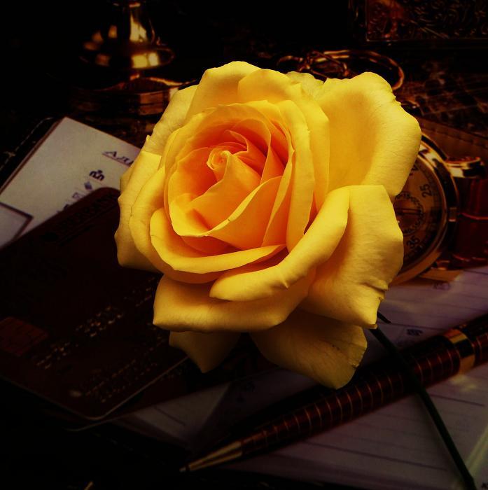 розы от ЛЭ.124078076_08 (697x700, 296Kb)