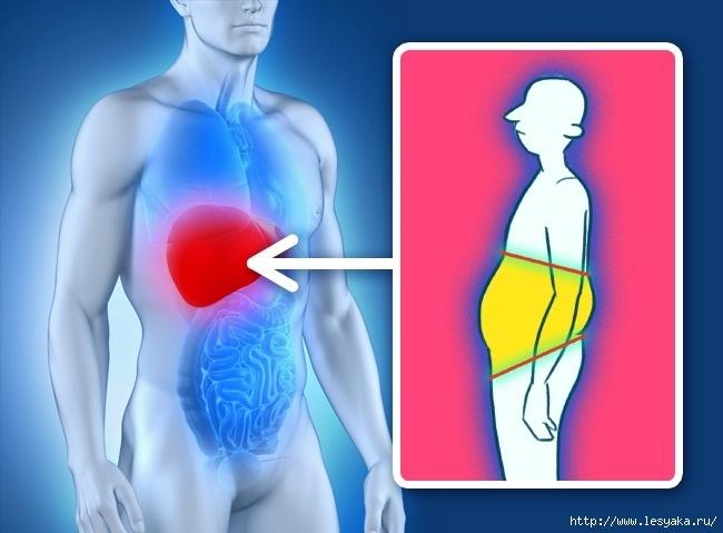 причины отложения жира на животе у женщин