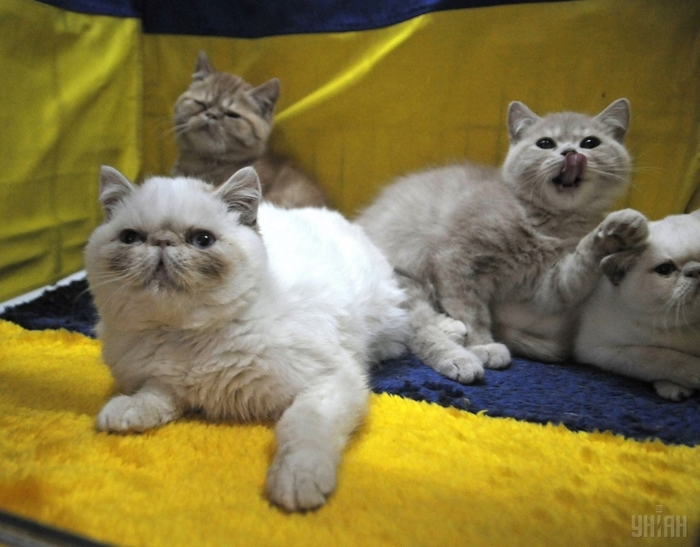 Рейтинг стран по количеству котов в семье