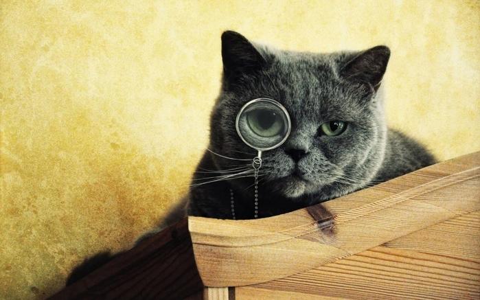 2663777_catcat (700x437, 245Kb)