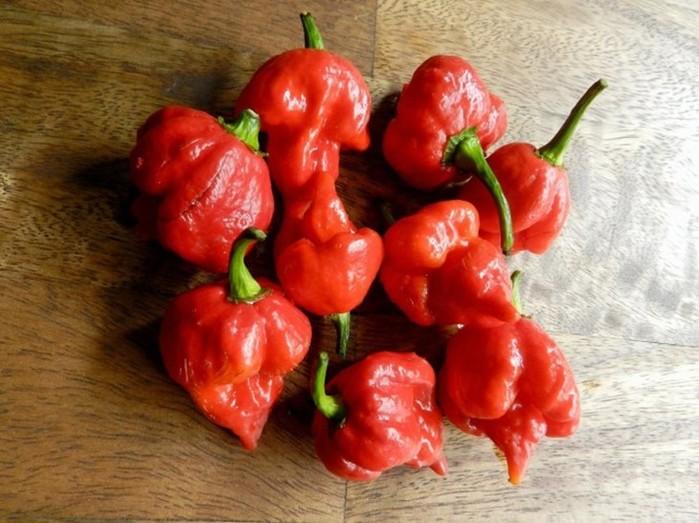 7 видов перца, самых опасных для человека!