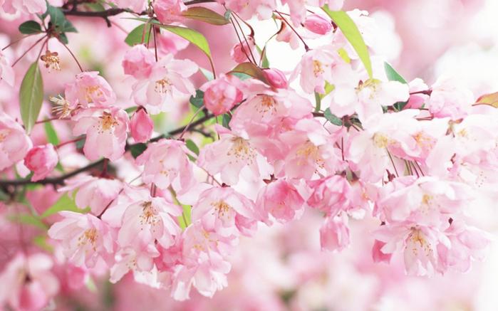 играет красками весна 22 (700x437, 372Kb)