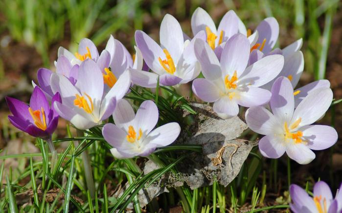 играет красками весна 24 (700x437, 403Kb)