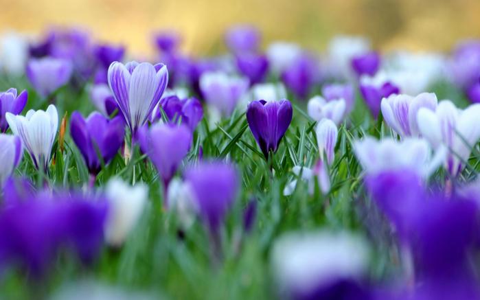 играет красками весна 26 (700x437, 288Kb)
