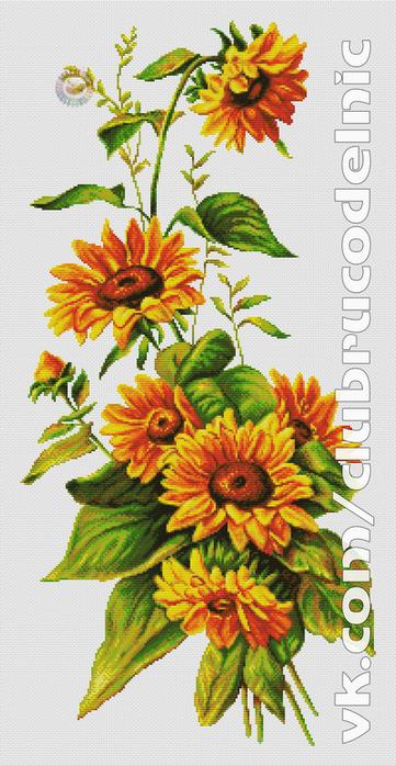 Sunflower (361x700, 364Kb)