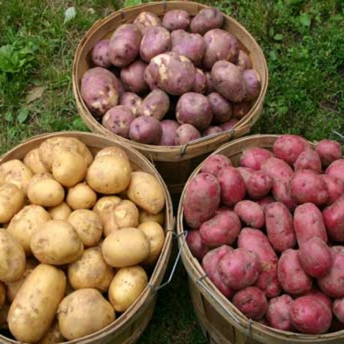 3726595_3potatovarieties1024x1024_1_ (700x700, 307Kb)