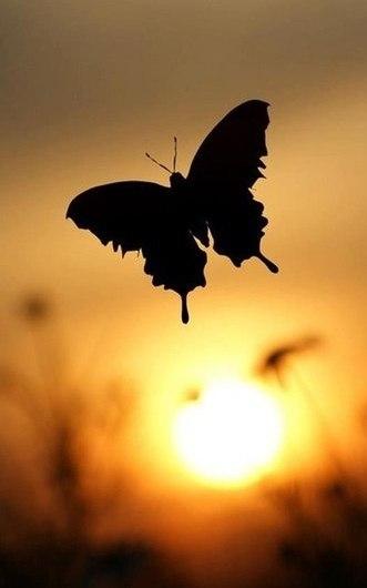 бабочка (531x730, 18Kb)