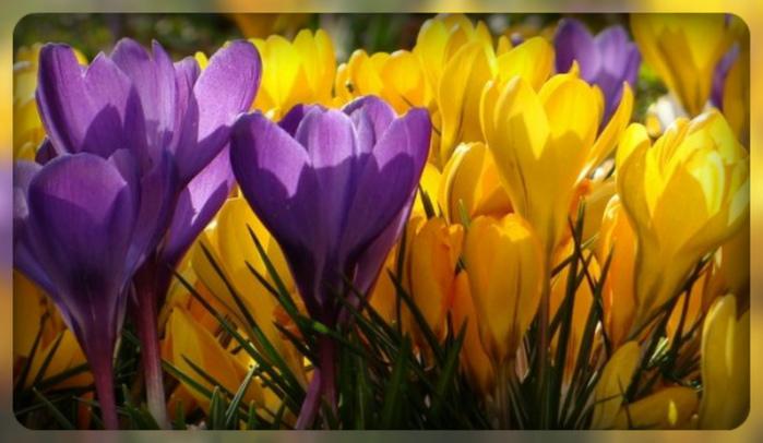 цветы 2 (700x406, 133Kb)