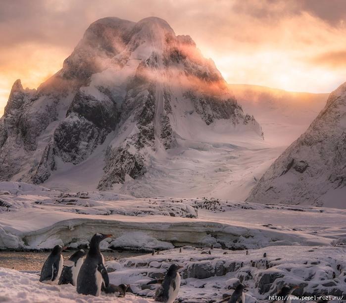 Antarctica-27-6-990x868 (700x613, 323Kb)