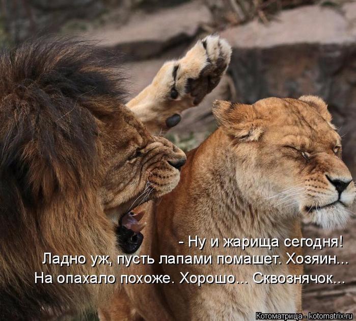 kotomatritsa_1n (700x630, 464Kb)